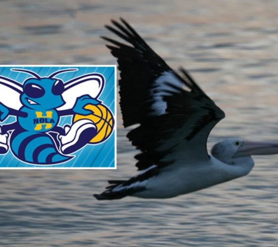 Pelicansart1