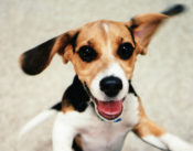 Your dog is truly happy youre home its science